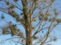 Baum in Herbst 2015